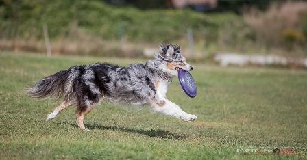 angel dogfrisbee agm 2016 (16)