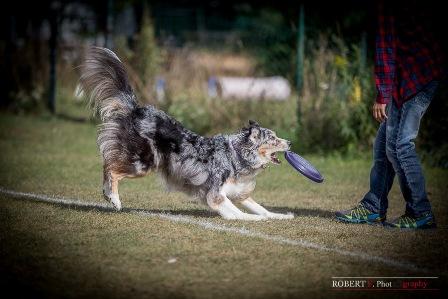 angel dogfrisbee agm 2016 (17)