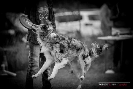 angel dogfrisbee agm 2016 (2)