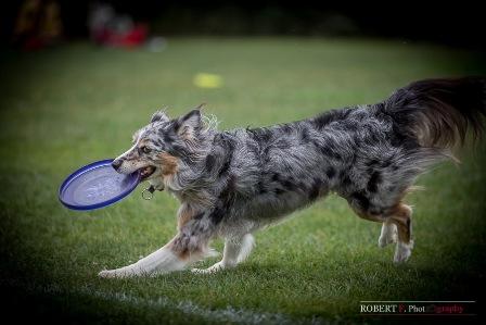 angel dogfrisbee agm 2016 (4)