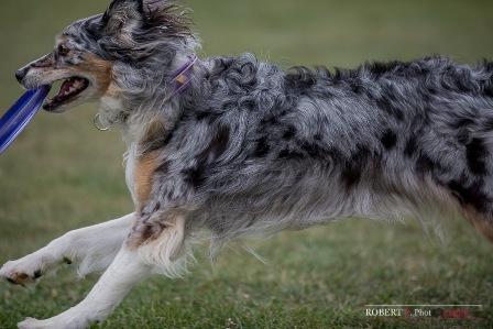 angel dogfrisbee agm 2016 (6)