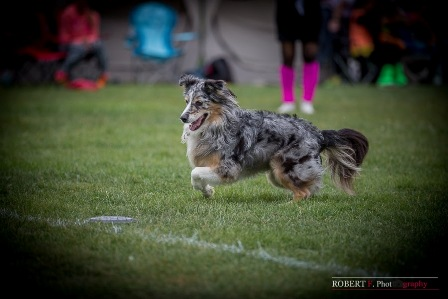 angel dogfrisbee agm 2016 (8)
