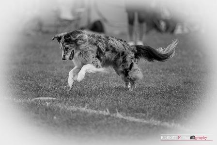 angel dogfrisbee agm 2016 (9)